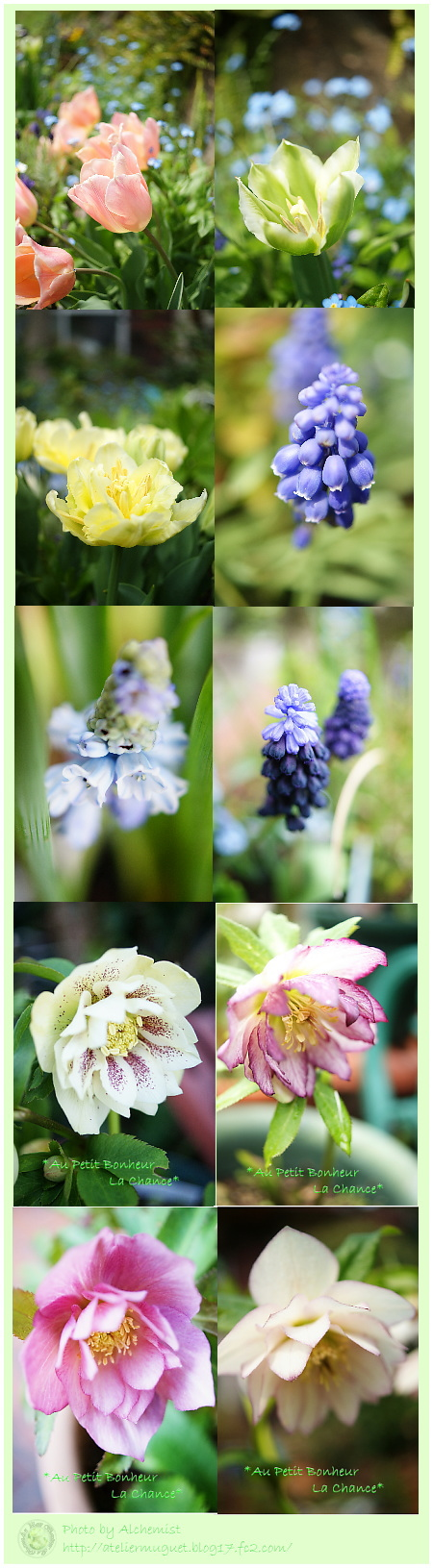 g4-gardenf.jpg