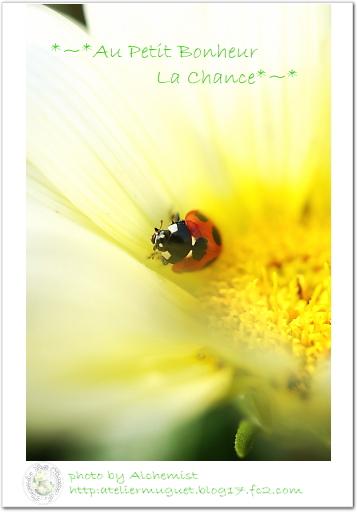 g4-ladybug.jpg