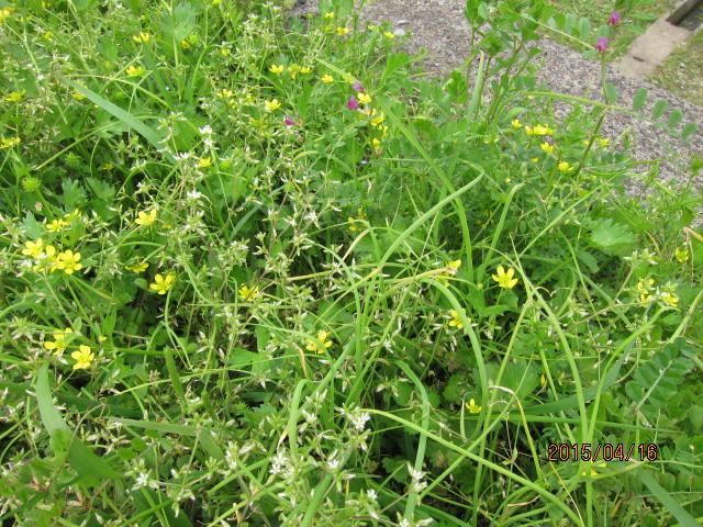 春に生えている草
