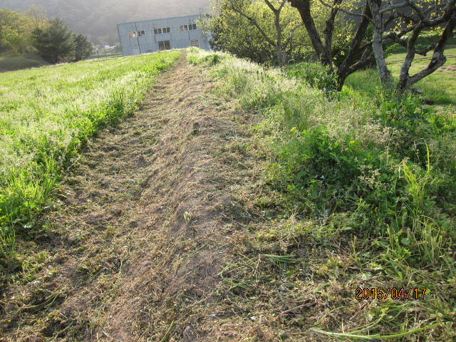 草刈り10