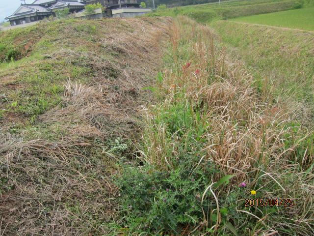 水路の草刈り1