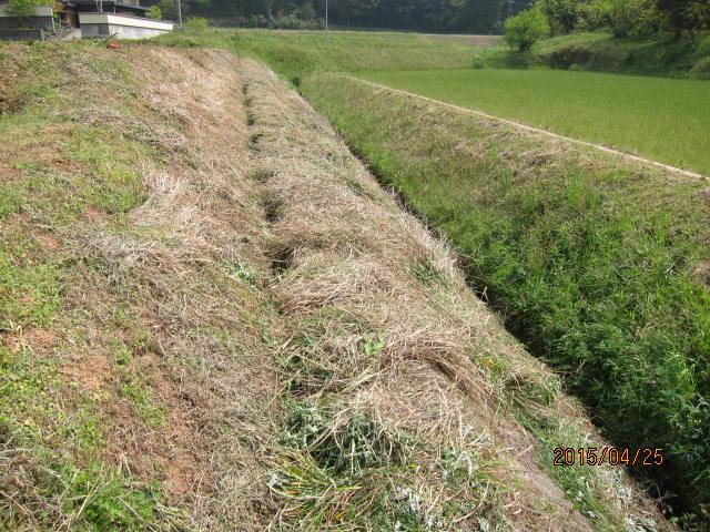 水路の草刈り2