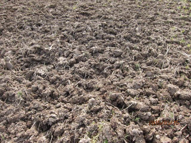 細かく耕した土