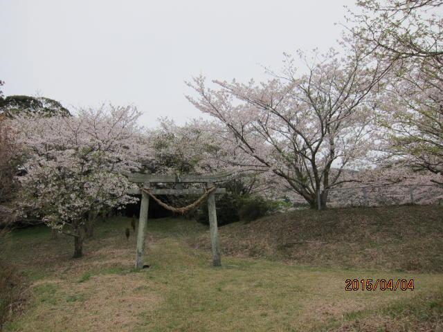 天神公園の桜1