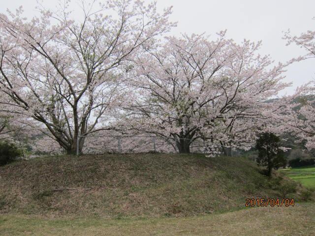天神公園の桜2