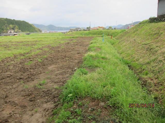 草刈りの畦1