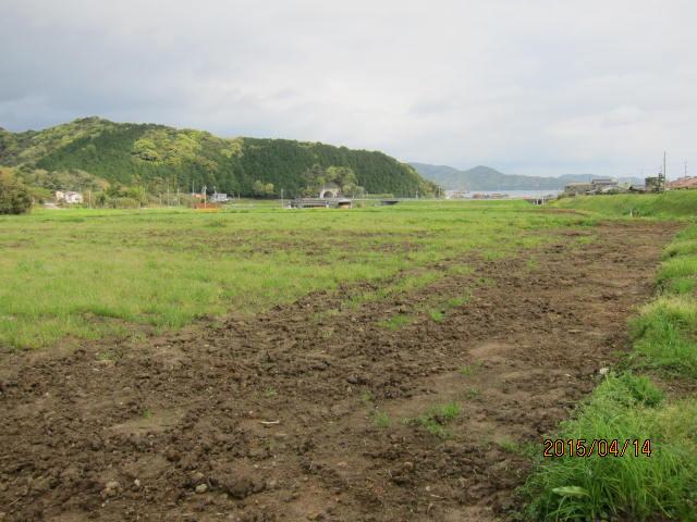草刈りの畦2