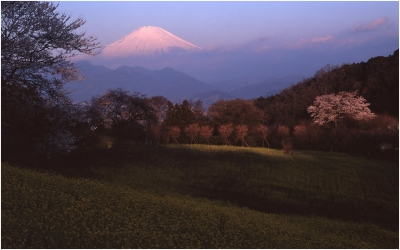 富士と桜と菜の花