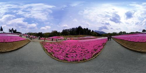 360°パノラマ写真 -芝桜-