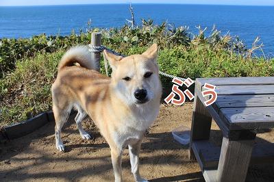 s-nakayoshi141220-IMG_4796