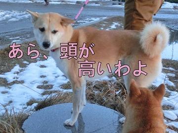 s-hatumoude150107-CIMG5670