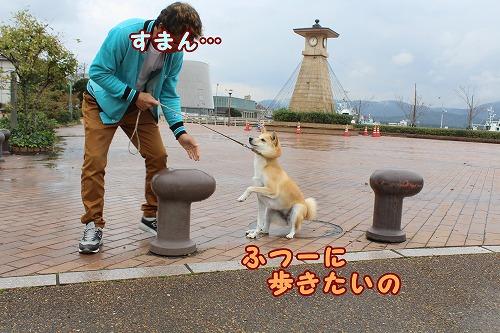 s-nagisa150131-IMG_4865
