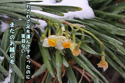 s-nagisa150201-IMG_5510