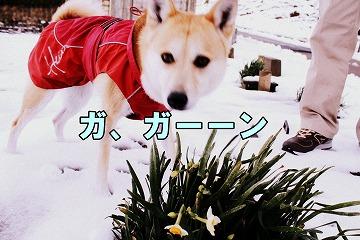 s-nagisa150202-1-IMG_5502