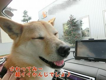 s-yakuyoku150208-CIMG6158