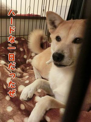 s-yakuyoku150208-CIMG6174