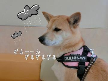 s-yakuyoku1150211-CIMG6145