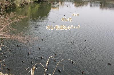 s-kozyou150324-1-IMG_6211