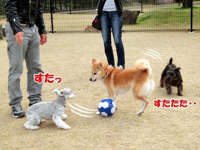 s-dogrun150425-CIMG7914