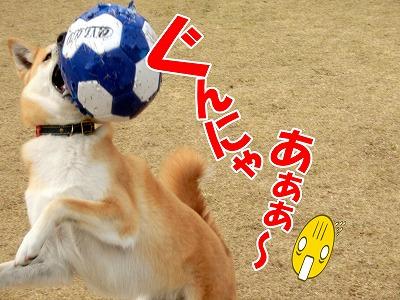 s-dogrun150425-CIMG7941