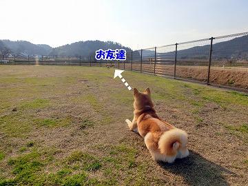 s-dogrun150424-1-CIMG7546