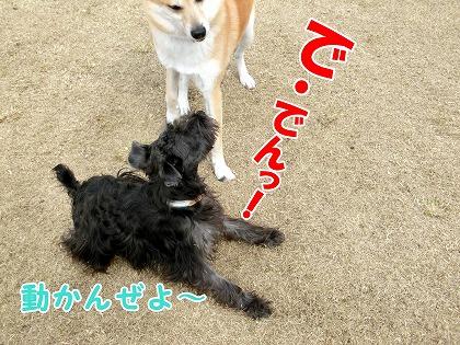 s-dogrun150426-CIMG7925