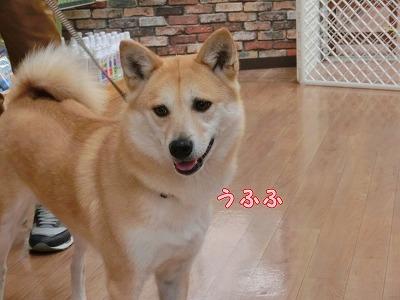 s-okaimono150511-CIMG8085