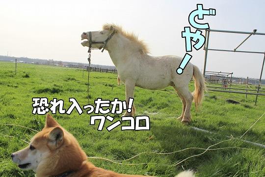 s-bokuzyou150514-IMG_6835