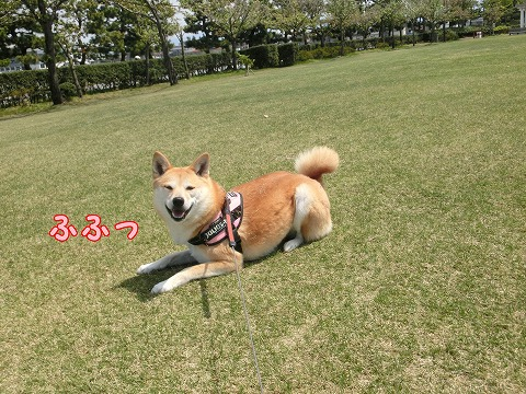 s-bokuzyou150514-CIMG8208