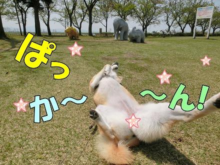 s-bokuzyou150514-CIMG8206