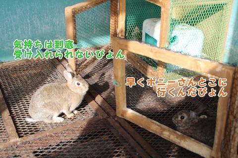 s-bokuzyou150517-IMG_6856