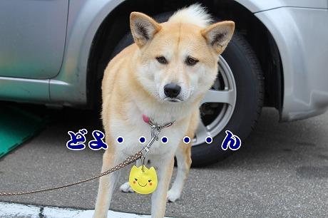s-2heika150519-IMG_7959