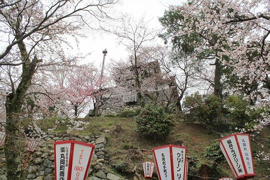 s-sakuraIMG_6646.jpg