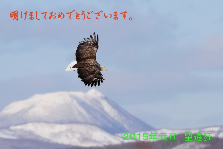 2015年賀_オジロワシs