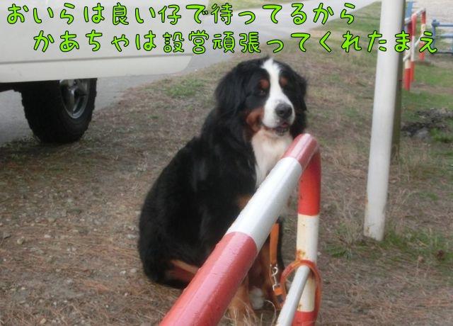 CIMG0046_20150421100846d95.jpg