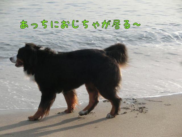 CIMG0094.jpg