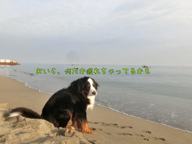 CIMG0108.jpg