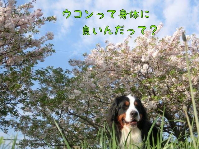 CIMG0240_20150424151653a28.jpg