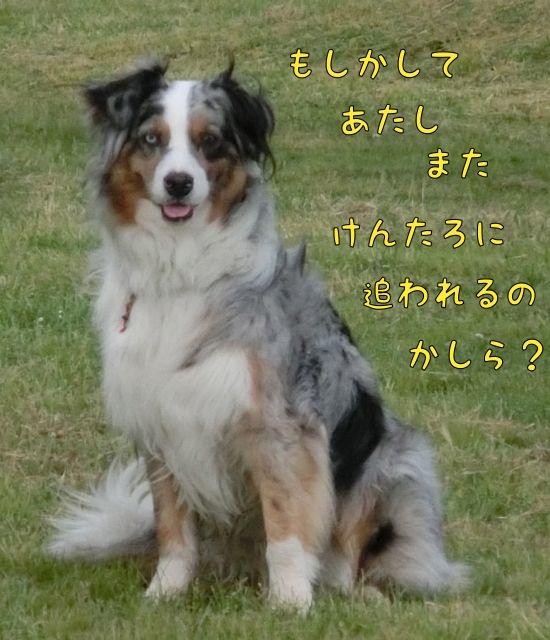 CIMG0842_201504301615578e9.jpg