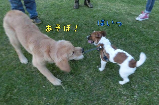 CIMG1524_20150510161608eb7.jpg