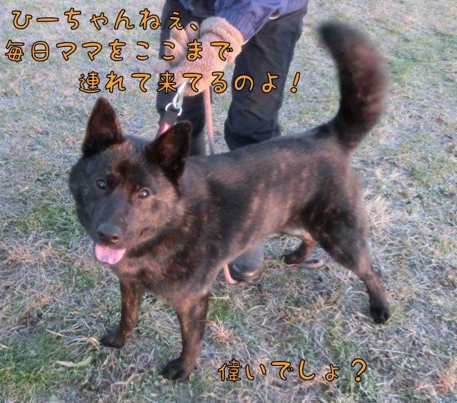 CIMG2191_201412121405366df.jpg