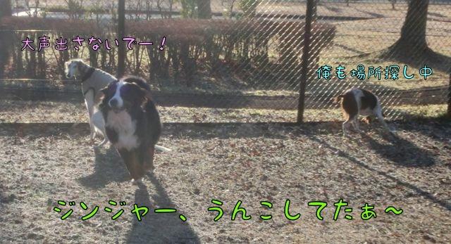 CIMG2300_20141216121855dec.jpg