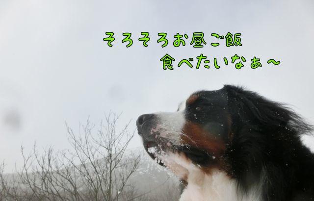 CIMG2496_2014121714321711f.jpg