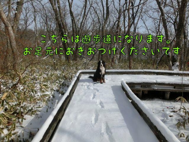 CIMG2498_20141217143219507.jpg
