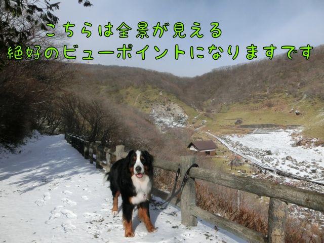 CIMG2515_2014121720120964b.jpg