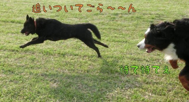 CIMG2662_201506021759449f4.jpg