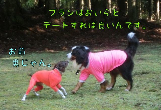CIMG2882_20141223134839a63.jpg