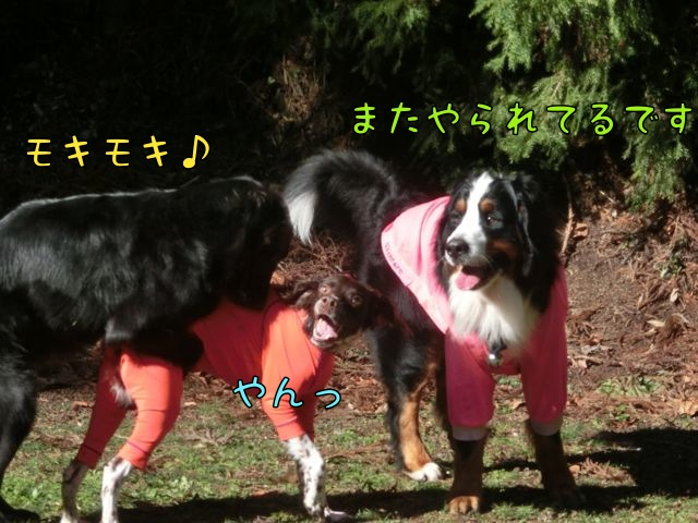 CIMG2991_20141223213333ac3.jpg