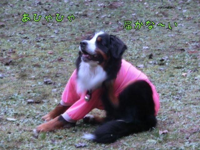 CIMG3261_201412260951570b4.jpg