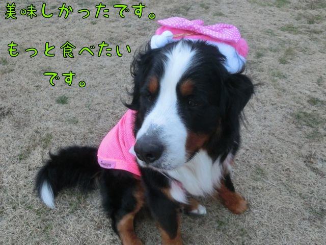 CIMG3374.jpg